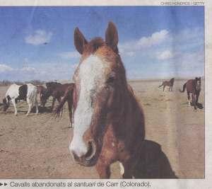 cavalls-usa-foto1
