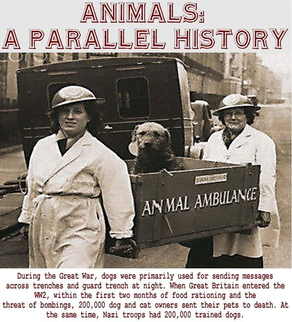 animals-parallel-history