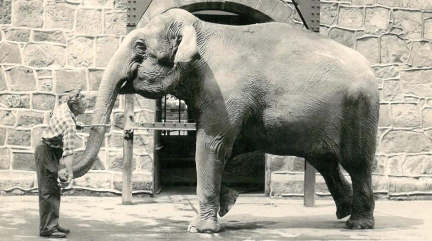 Barcelonejant d'Olga Merino, sobre l'elefanta Julia