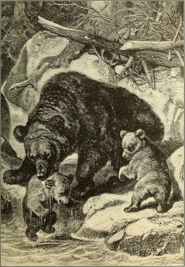 animals_in_action_studies_and_stories_of_beasts_birds_and_reptiles_their_habits_their_homes_and_their_peculiarities_1901_14755107132