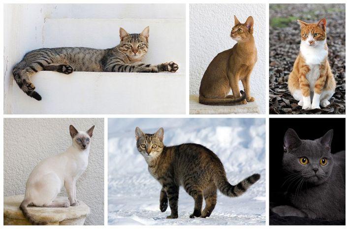 cat-poster
