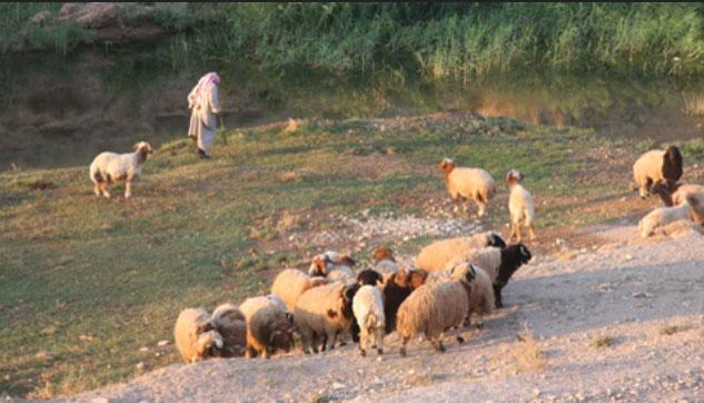 ramat-ovelles